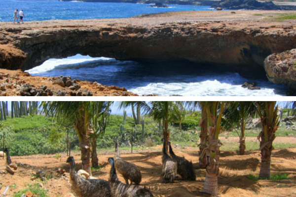 Aruba-Natural Bridge-Struisvogelfarm